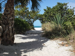 the beach in Naples, Florida