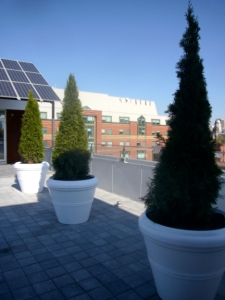 Green views atop Planet Traveler hostel in Toronto