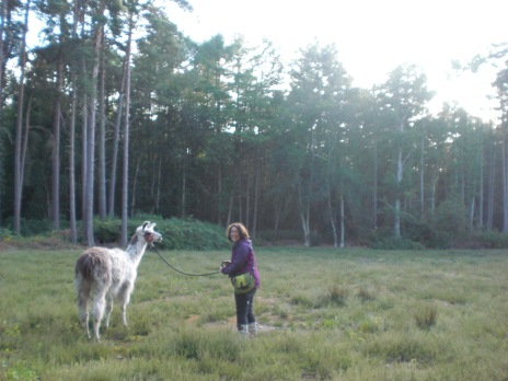 Louis and Lizzie in a field