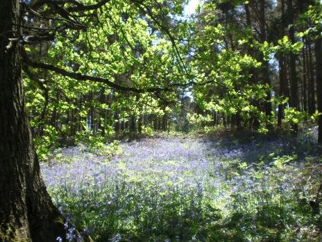 Flowers in the Surrey Hills
