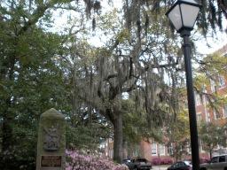 Walking in Savannah