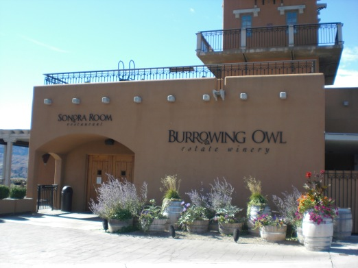 Burrowing Owl Oliver BC