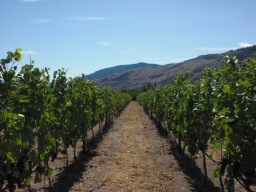 Trundling Through South Okanagan's Wineries